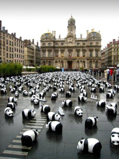Panda-monium?