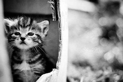 Include Me Kitten.
