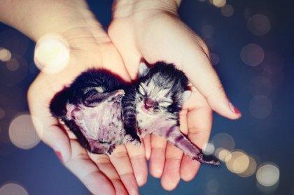 Baby Kitten!